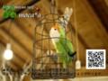 [コザクラインコ][20121129][オーダー][ぬいぐるみ][小鳥][制作][写真][ペット][基に][犬]