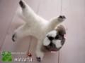 [犬][Dog][собака][chien][ペット][依頼][ぬいぐるみ][オリジナル][オーダーメイド][制作]