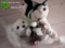 [猫ぬいぐるみ][オーダーぬいぐるみ][猫][Cat][кошка][ペットぬいぐるみ][плюш][peluche]