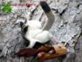 [ぬいぐるみ][袋モモンガ][モモンガ][猫][誕生日][雑貨][オーダーメイド][プレゼント][ウェルカムボード][結婚式]