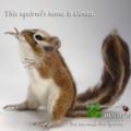 [シマリス][Chipmunk][бурундук][Chipmunk][ペット][依頼][ぬいぐるみ][オリジナル][オーダーメイド][制作]