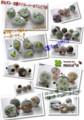 [キノコ模様][motif de champignons][Гриб модель][Mushroom pattern][がま口財布][ペット][依頼][ぬいぐるみ][オリジナル][オーダーメイド]