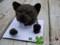 [犬][猫][ペット][時計][オーダーメイド][写真][モカ]