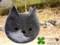 [犬][猫][ペット][バッグ][オーダーメイド][写真][モカ][雑貨][時計]