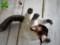 [猫][犬][モカ][ヒマラヤン][オーダーメイド][ぬいぐるみ][写真を基に][制作]