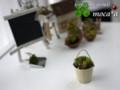 [萌ちゃん][多肉植物][poetic art][art][多肉植物寄せ植え][寄せ植え]