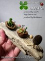 [poetic art][多肉植物][寄せ植え][モカ][詩情][胡桃の殻][ブリキのバケツ]
