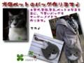 [帽子][ペット][犬][猫][雑貨][オーダーメイド]