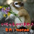 [アイドル][モカ][ペット][犬][猫][雑貨][オーダーメイド]