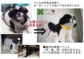 [コーギー犬][犬][ぬいぐるみ][オーダーメイド][制作][モカ][マルチーズ犬][クロパグ犬][制作][モカ]
