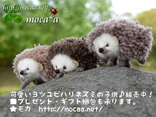 [ハリネズミ][ヨツユビハリネズミ][飼育方法][モエチャン][モカ][販売][ハリネズミのモエチャ][20130329]