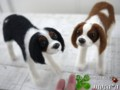 [犬ぬいぐるみ][キャバリア][羊毛フェルト犬オーダ][オーダーメイド][オーダーメイド犬ぬい][キャバリアキングチャ]
