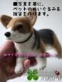 [犬ぬいぐるみ][猫ぬいぐるみ][羊毛フェルト犬オーダ][オーダーメイド][うさぎぬいぐるみ][鳥ぬいぐるみ][モカ]