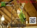 [鳥ぬいぐるみ][鳥ぬいぐるみオーダー][羊毛フェルト鳥オーダ][オーダーメイドぬいぐ][モカ]