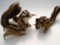 [ペット][犬][猫][ぬいぐるみ][羊毛フェルト][オーダーメイド][リス]