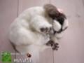 [ペット][犬][猫][ぬいぐるみ][羊毛フェルト][オーダーメイド][モモンガ][フクロモモンガ]