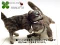 [ペット][犬][猫][ぬいぐるみ][羊毛フェルト][オーダーメイド][猫ぬいぐるみ][猫ぬいぐるみオーダー]