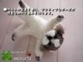 [犬ぬいぐるみ][オーダーメイド犬ぬい][羊毛フェルト犬ぬいぐ][羊毛フェルト犬ぬいぐ][シーズ][Ши-тцу][Shih Tzu]