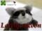[アライグマぬいぐるみ][オーダーメイドアライ][羊毛フェルトアライグ][羊毛フェルトアライグ][アライグマ][Raccoon]