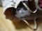 [猫動画][猫画像][cat video][Kitten video][Cats and Kittens][cat25][猫ニャーゴ][ビビ][ニャミ雄]