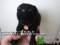 [子猫動画][猫画像][猫術後服][Cats and Kittens][kitten photos][術後服][猫][ねこ][ネコ][術後服作り方]