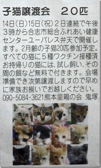 [子猫の里親募集][子猫里親][cat video Kitten video][子猫動画][猫ニャーゴ][cat25][Cat Foster]