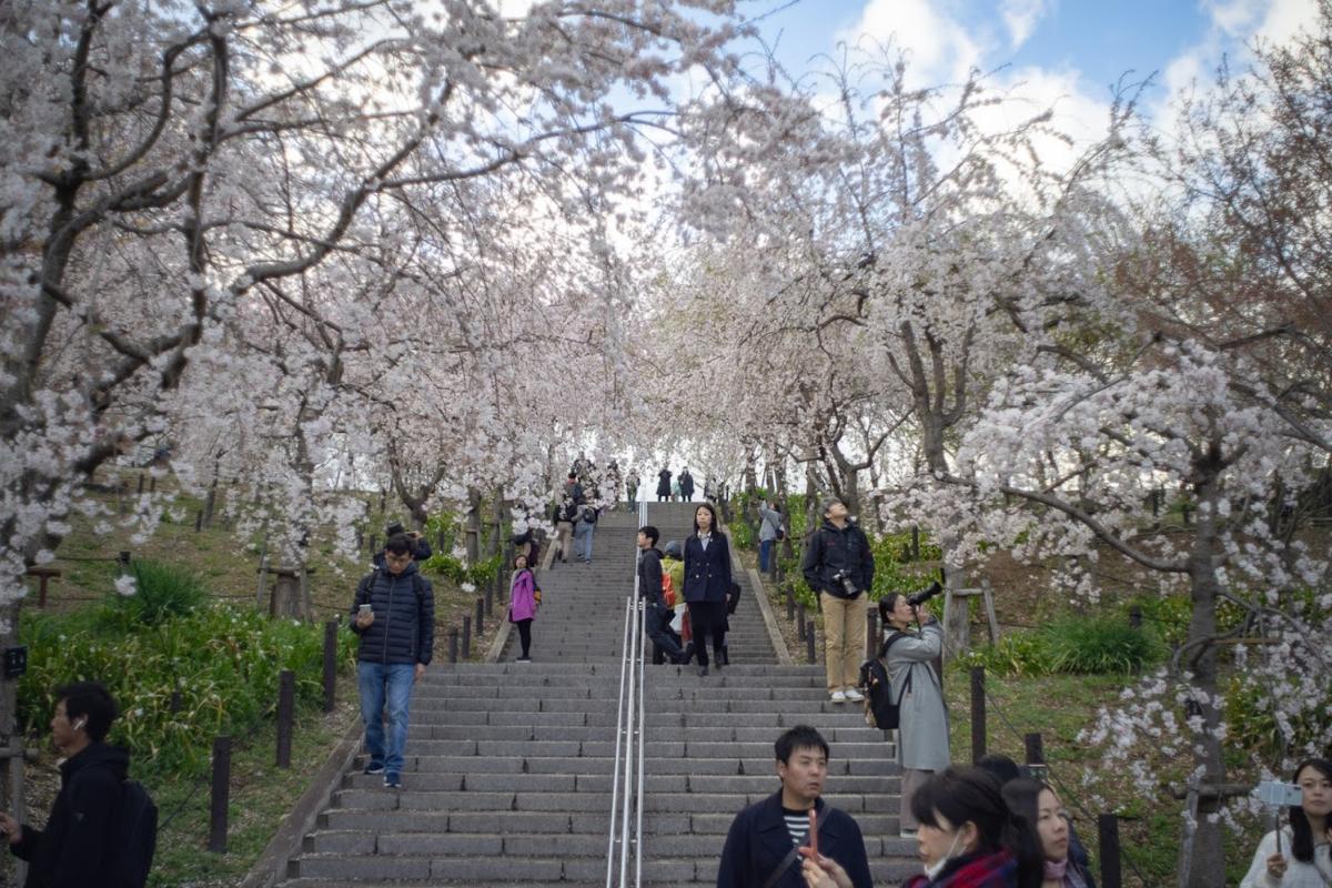 東山動植物園 桜の回廊