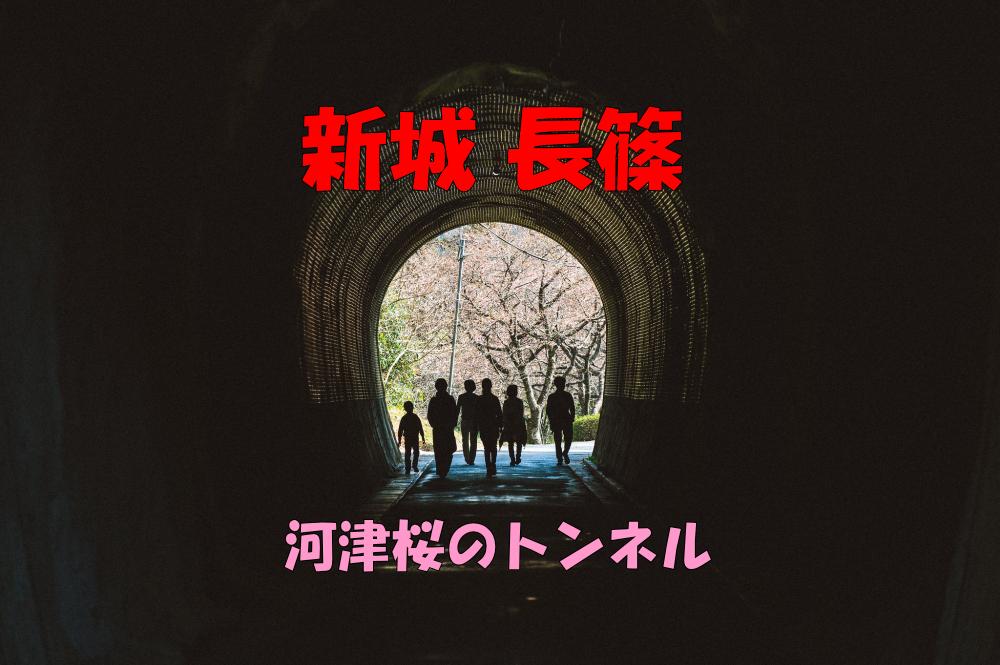 新城 長篠 河津桜のトンネル