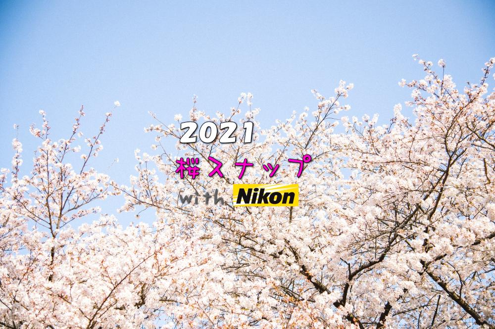 Nikonで撮る桜スナップ