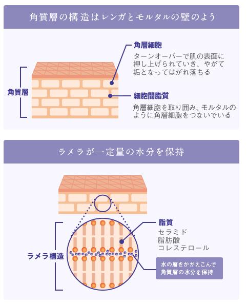 f:id:mochi-mochi-kun:20180130115705p:plain