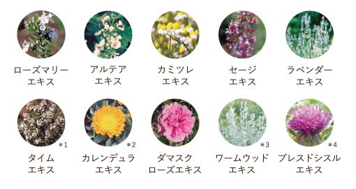 f:id:mochi-mochi-kun:20181221171732p:plain