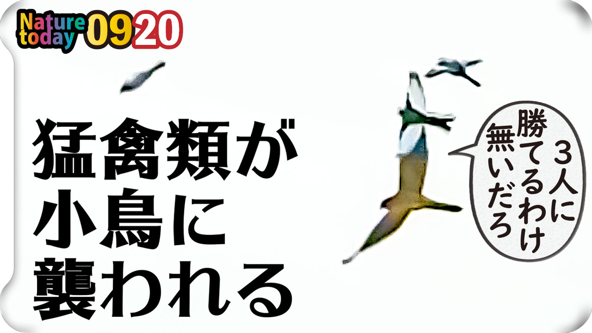 f:id:mochico25:20200920194452j:plain