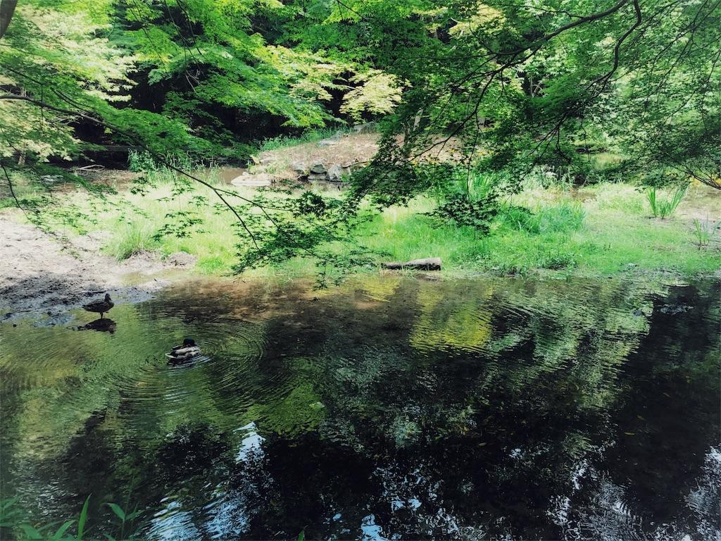 f:id:mochidori:20170522165150j:image