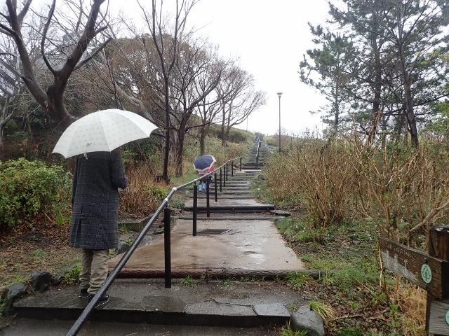 f:id:mochikichi-blog:20200308130721j:plain