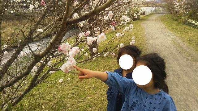 f:id:mochikichi-blog:20200328223704j:plain