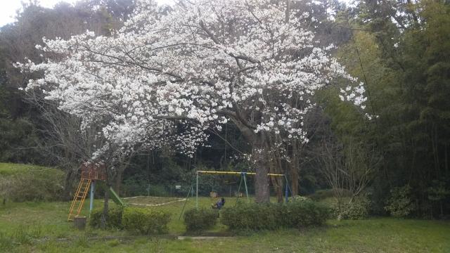 f:id:mochikichi-blog:20200328223828j:plain