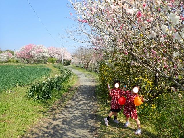 f:id:mochikichi-blog:20200412203556j:plain