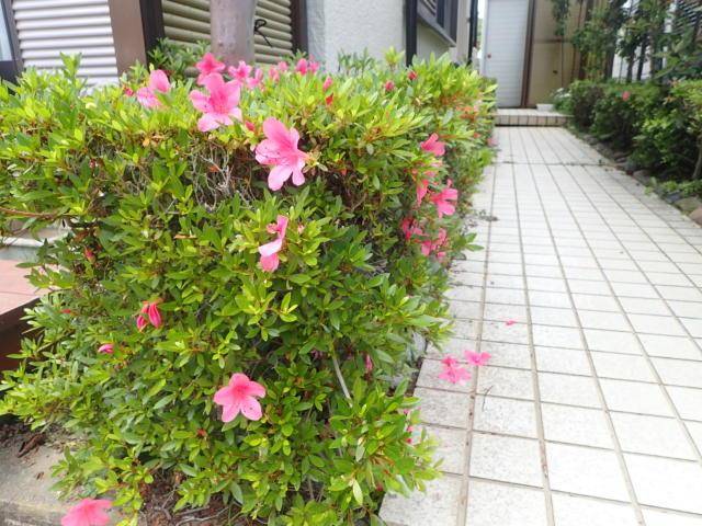 f:id:mochikichi-blog:20200527141531j:plain