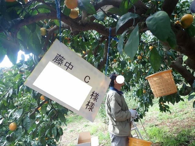 f:id:mochikichi-blog:20200611105735j:plain