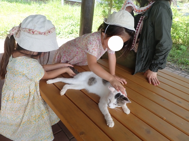 f:id:mochikichi-blog:20200611163735j:plain