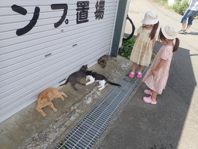 f:id:mochikichi-blog:20200611163751j:plain