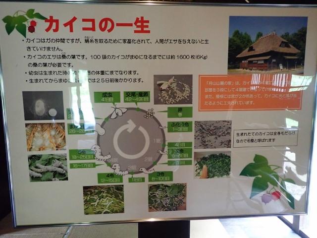 f:id:mochikichi-blog:20200611212743j:plain