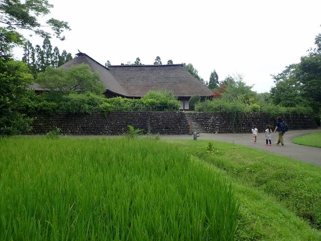 f:id:mochikichi-blog:20200611213035j:plain