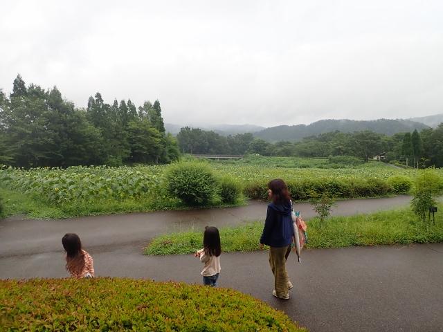 f:id:mochikichi-blog:20200611213750j:plain