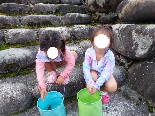f:id:mochikichi-blog:20200612111722j:plain