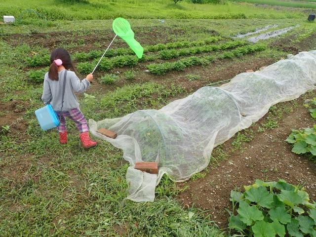 f:id:mochikichi-blog:20200612153502j:plain