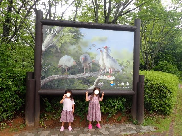 f:id:mochikichi-blog:20200612154257j:plain