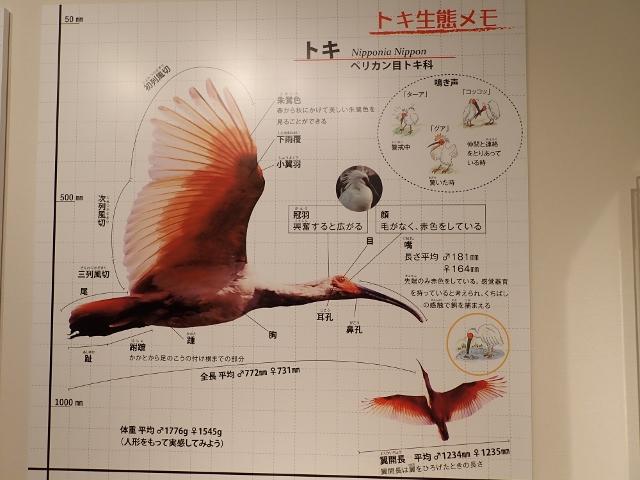 f:id:mochikichi-blog:20200612154313j:plain