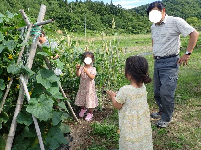 f:id:mochikichi-blog:20200612160203j:plain