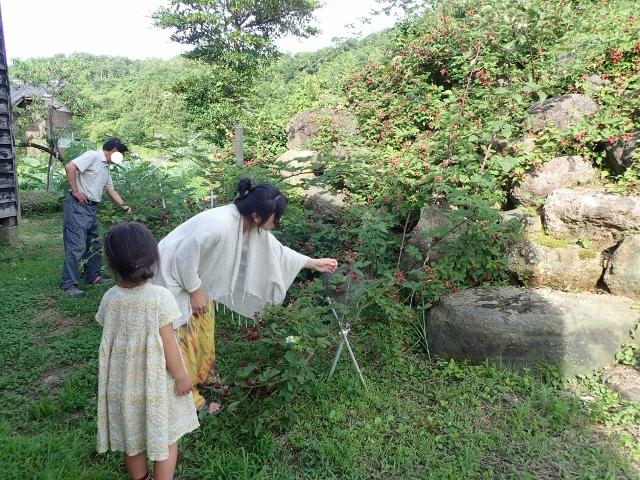 f:id:mochikichi-blog:20200612160225j:plain